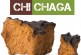 Why Chaga Mushrooms Are Known To Combat Cancer Cells